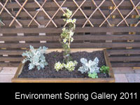 Environment Spring Gallery 2011