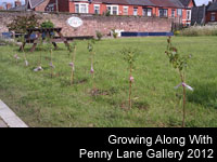 Growing Along With Penny Lane Gallery 2012